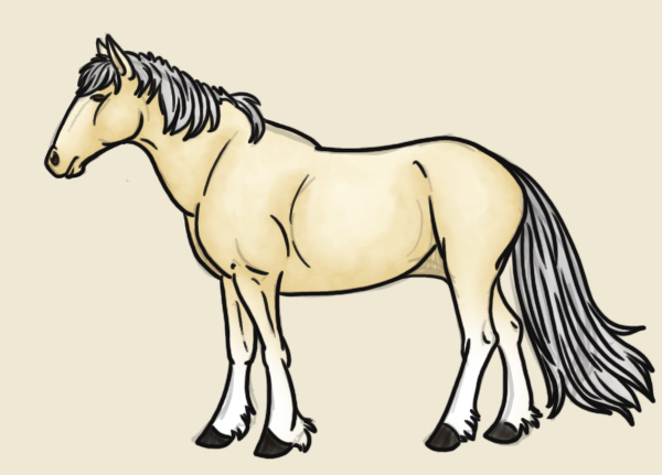 Horse Reference PSD Preview Image